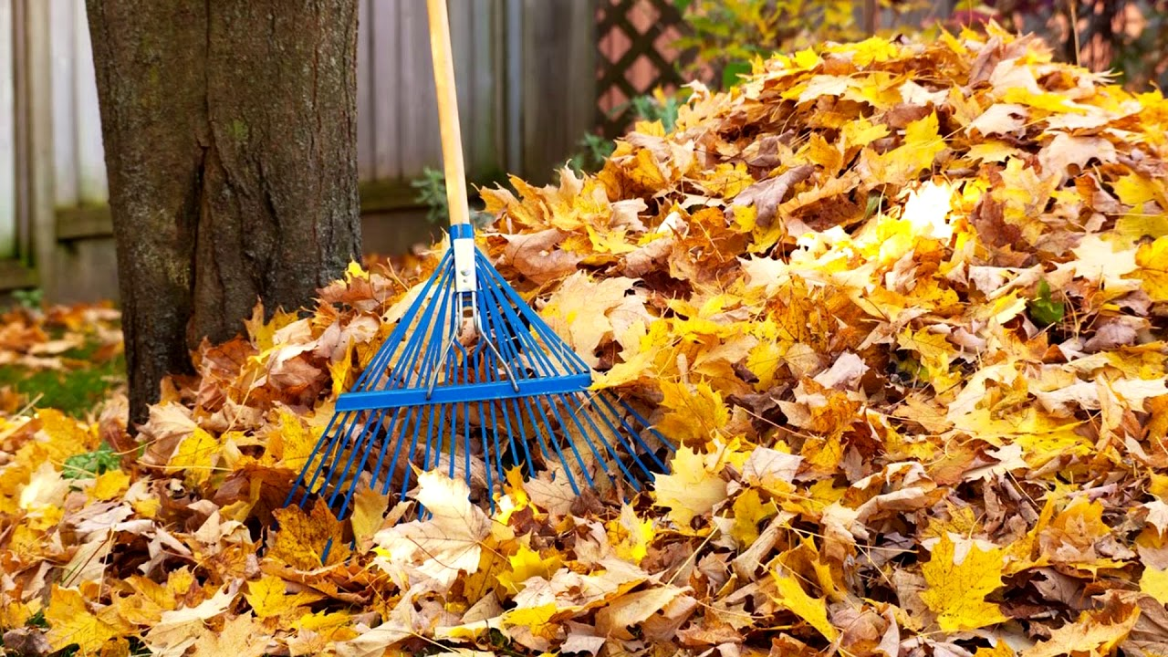 What Is The Best Leaf Vacuum To Buy?