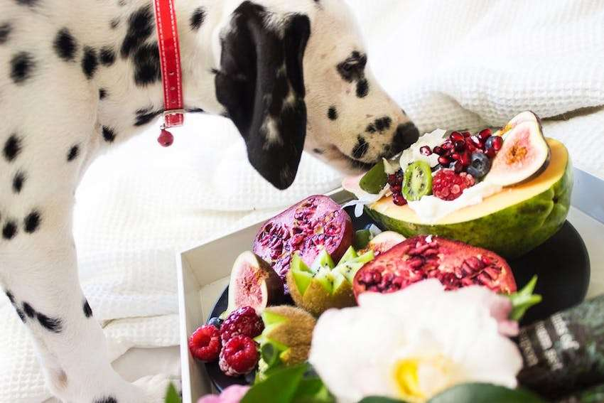 Prescription dog foods for allergies (mind the hydrolyzed protein)